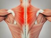 reasons for muscular pain
